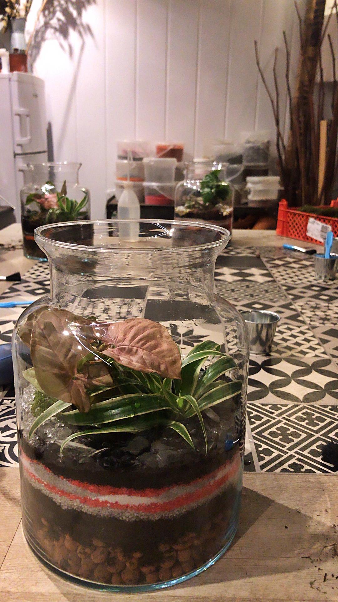 Cadeaux activité verte éthique manuel manuelles femme atelier terrarium DIY